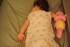 Sleeping With Seahorse