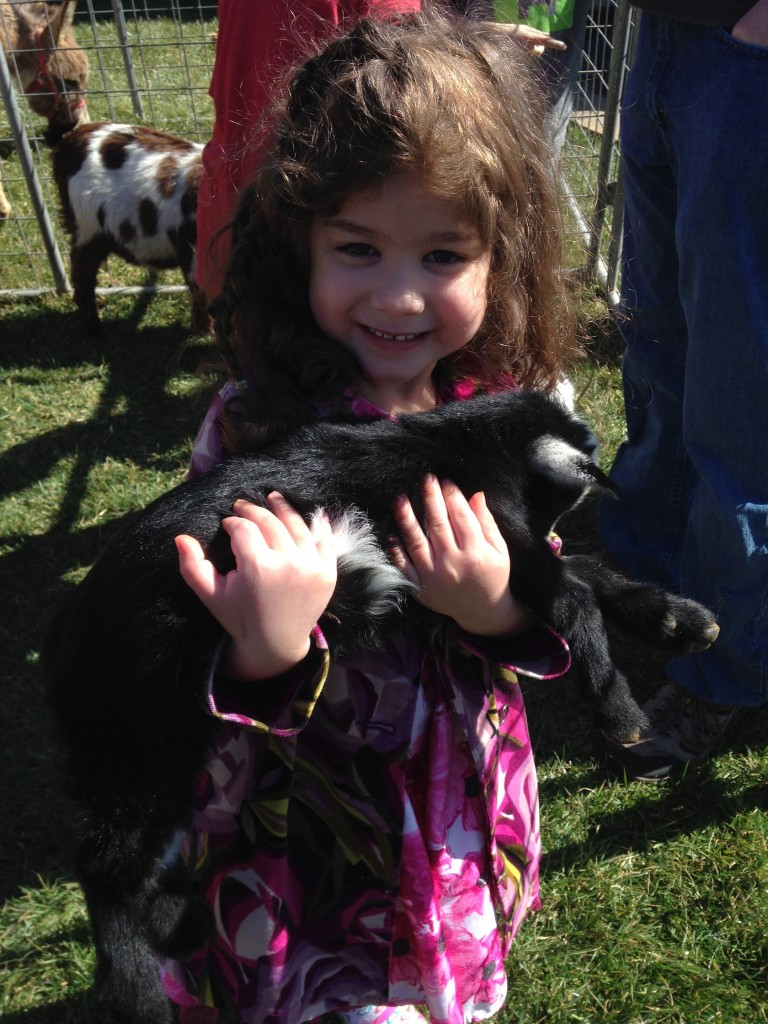 At her friend's petting zoo birthday party, Coraline made fast friends with a baby lamb (3/7/15).